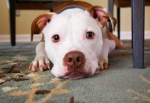 Best-Ways-To-Welcome-One-Rescue-Dog-at-Your-Home-on-highqualityblog