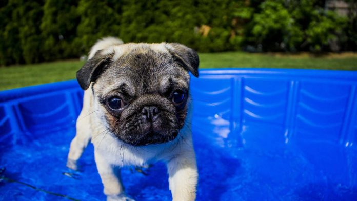 Pet-Pool-Buying-Guide-8-Factors-You-Need-To-Consider-on-highqualityblog